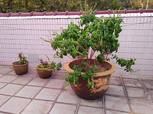 Roof herbs (1) (4)