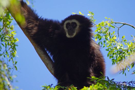 Usa-oakland-zoo-monkey-credit-allie-caulfield