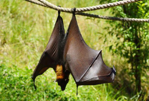 Usa-oakland-zoo-bats-credit-allie-caulfield