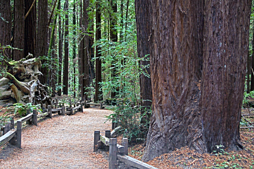 Sonoma_County_parks_Armstrong_Redwoods_State_Natural_Reserve_Guerneville